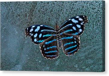 Hdr Butterfly Canvas Print