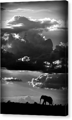 He Walks Under An African Sky Canvas Print by Wildphotoart