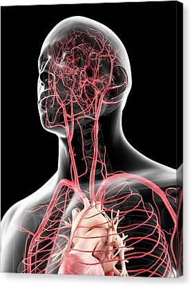 Human Head Canvas Print - Head Arteries by Sciepro