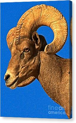 Head Of A Big Horn Canvas Print by Adam Jewell