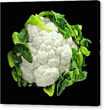 Head Of Cauliflower Canvas Print by Diana Angstadt