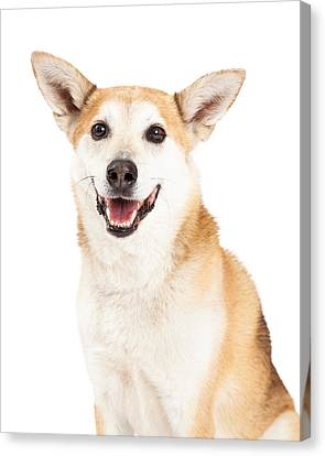 Cattle Dog Canvas Print - Head Shot Of  Australian Cattle And Shiba Inu  Mix Dog by Susan Schmitz