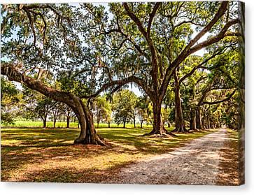 Evergreen Plantation Canvas Print - Heading South by Steve Harrington