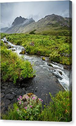 Canvas Print featuring the photograph Headwaters In Summer by Tim Newton