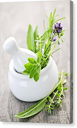 Healing Herbs In Mortar And Pestle Canvas Print by Elena Elisseeva