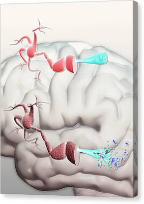 Healthy And Alzheimer's Neurons Canvas Print