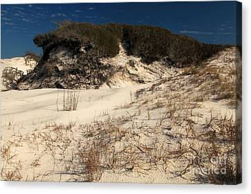 Healthy Dunes Canvas Print by Adam Jewell