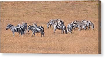 Hearst Castle Zebras Canvas Print by Lynn Bauer