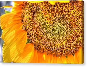 Heart-felt Sunflower Canvas Print