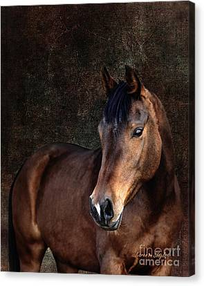 Forelock Canvas Print - Heart by Karen Slagle
