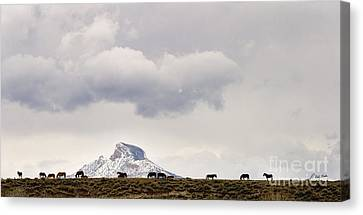 Heart Mountain Horses Canvas Print by J L Woody Wooden