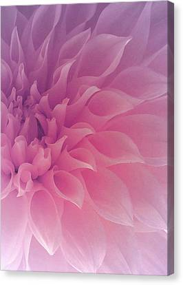 Heart Of A Dahlia Canvas Print by The Art Of Marilyn Ridoutt-Greene