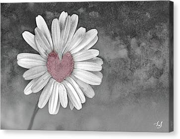 Heart Of A Daisy Canvas Print by Linda Sannuti