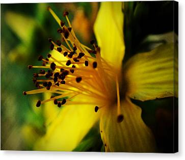 Canvas Print featuring the photograph Heart Of A Flower by Zinvolle Art
