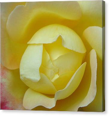 Heart Of A Yellow Rose Canvas Print by Brian Jones