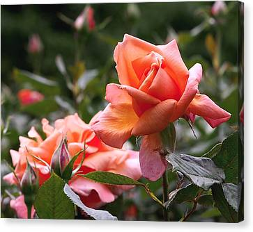 Canvas Print featuring the photograph Heart Of Gold Roses by Rona Black