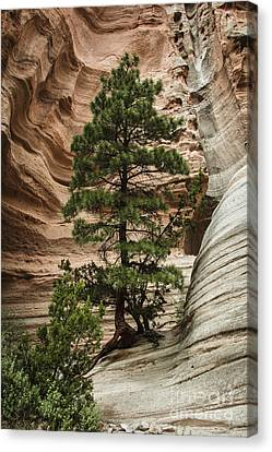 Survive Canvas Print - Heart Of The Canyon by Terry Rowe