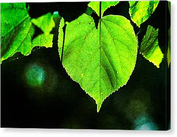 Lime Tree Canvas Print - Heart Of The Forest - Green by Alexander Senin