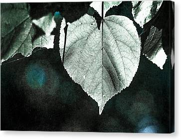 Lime Tree Canvas Print - Heart Of The Forest - Silver by Alexander Senin