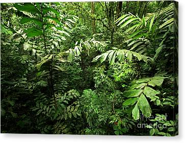Heart Of The Rain Forest - Costa Rica Canvas Print by Matt Tilghman