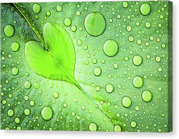 Heart Canvas Print by Patrick Foto