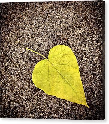 Heart Shaped Leaf On Pavement Canvas Print