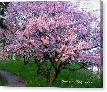 Canvas Print featuring the painting Heartfelt Cherry Blossoms by Bruce Nutting