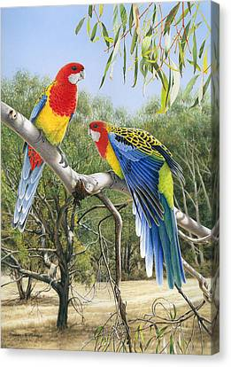 Heatwave - Eastern Rosellas Canvas Print by Frances McMahon