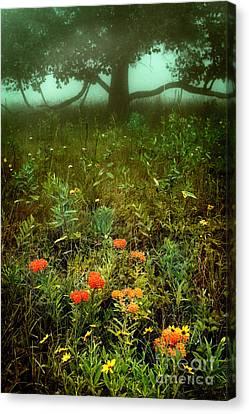Heaven In The Gloom I - Blue Ridge Parkway Canvas Print by Dan Carmichael