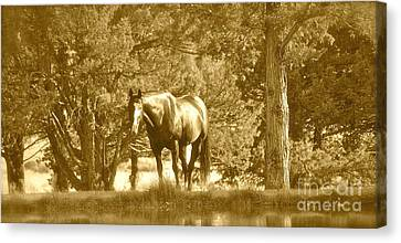 Canvas Print featuring the photograph Heaven On Earth by Barbara Dudley