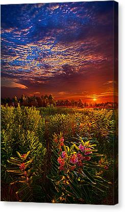 Heaven On Earth Canvas Print by Phil Koch