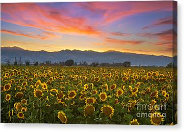 Heaven Canvas Print by Rima Biswas