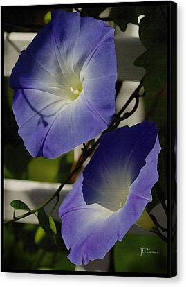 Canvas Print featuring the photograph Heavenly Blue Morning Glory by James C Thomas