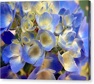 Heavenly Blues Canvas Print by RC deWinter