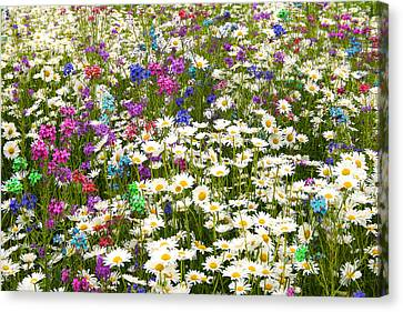 Canvas Print featuring the photograph Heavenly Flower Bed by Larry Landolfi