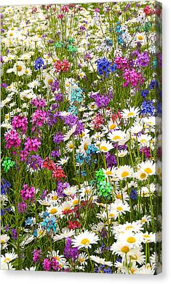 Canvas Print featuring the photograph Heavenly Flowers 2 by Larry Landolfi