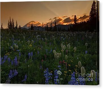 Heavenly Garden Canvas Print by Mike  Dawson
