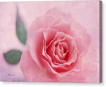 Heavenly Rose Canvas Print by Georgiana Romanovna