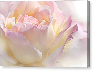 Heaven's Pink Rose Flower Canvas Print by Jennie Marie Schell