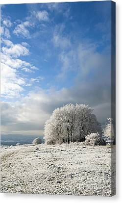 Heavy Frost Canvas Print by Anne Gilbert