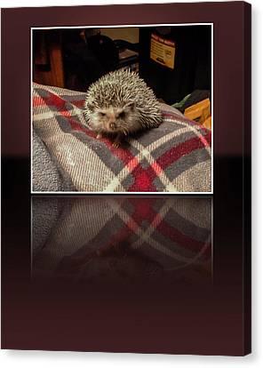 Hedgehog 5 Canvas Print
