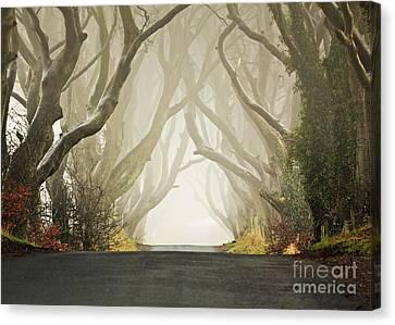 Hedges Canvas Print by Pawel Klarecki