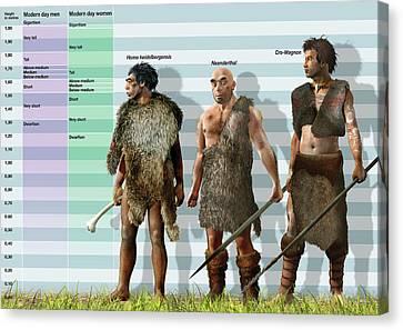 Genus Canvas Print - Height Variation In Pleistocene Hominids by Jose Antonio Pe�as
