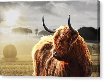 Heilan Coo On Fire Canvas Print