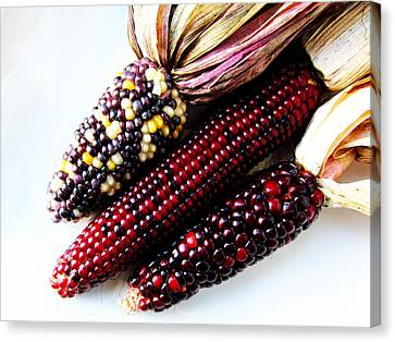 Indiana Corn Rows Canvas Print - Heirloom Corn by Tina M Wenger