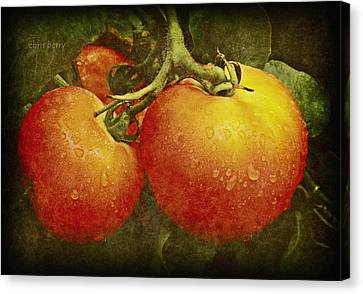Heirloom Tomatoes On The Vine Canvas Print by Chris Berry