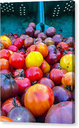 Heirloom Tomatoes V. 2.0 Canvas Print by Dennis Reagan