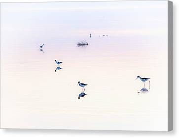Heiwa I Canvas Print by Peter Tellone