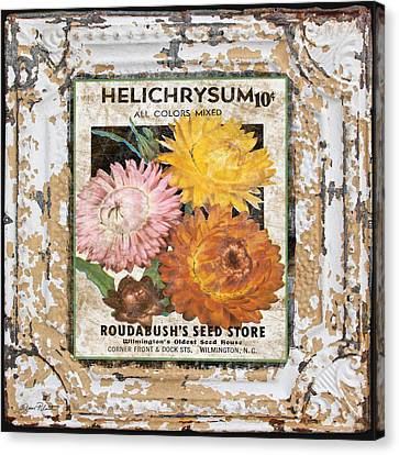 Helichrysum On Vintage Tin Canvas Print by Jean Plout