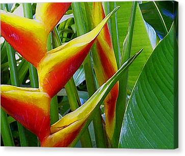 Heliconia Bihai Kamehameha Canvas Print by James Temple